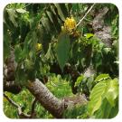 huile-essentielle-d-ylang-ylang-pranarom